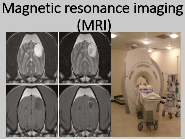 Magnetic resonance imaging (MRI) in Veterinary practices