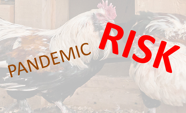 What are the pandemic risks of bird flu?