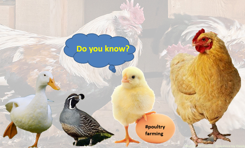Tips for how to do profitable Poultry farming in Poultry businesses