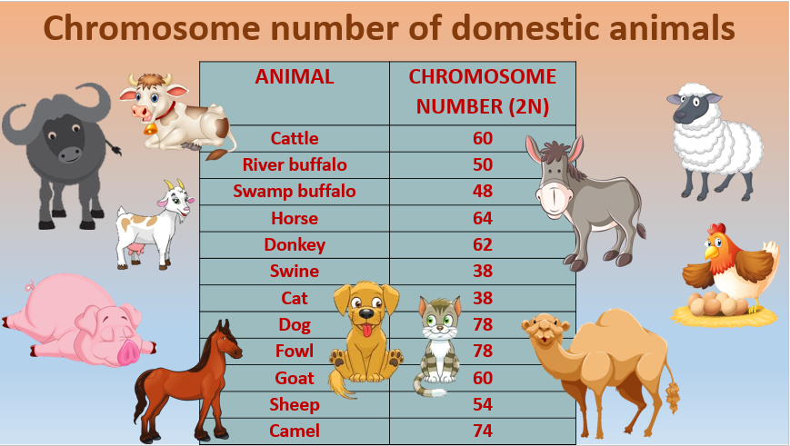 Do memorised the Chromosome numbers of domestic animals in a simple way