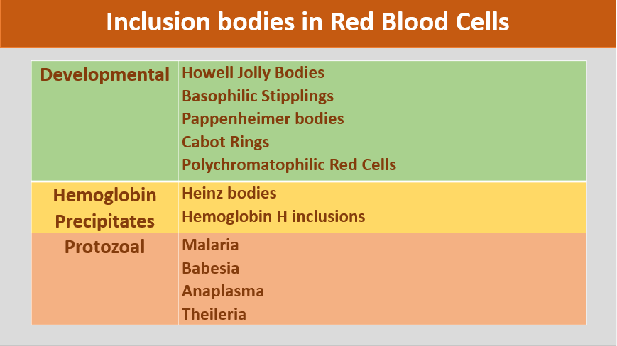 Did you know which are the inclusion bodies in Red Blood Cells?